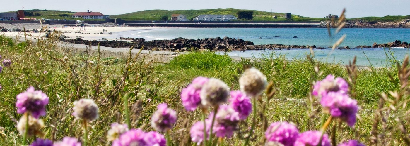 The Bay Guernsey